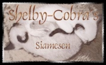 Siamese Cats Cattery Shelby-Cobra